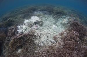 Fish bomb damage, Timba Timba island, Darvel Bay, Sabah, Borneo, East Malaysia.