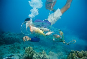 Hookah diver collecting bombed fish, The Philippines